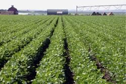 Quadros qualificados apostam na agricultura para equilibrar contas