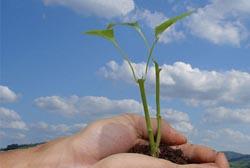 «Carbono Zero» reduz impacto ambiental de negócios