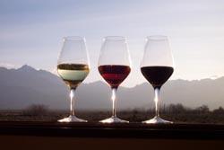 Alterações climáticas não interferem na qualidade do vinho