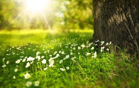 Dicas da Sociedade Ponto Verde para um verão mais amigo do ambiente