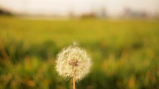 Não deixe que as alergias dominem a sua primavera