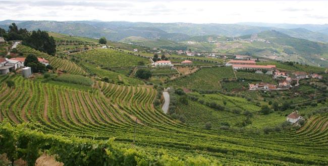 Tecnologia portuguesa vai prever pragas e doenças nas vinhas