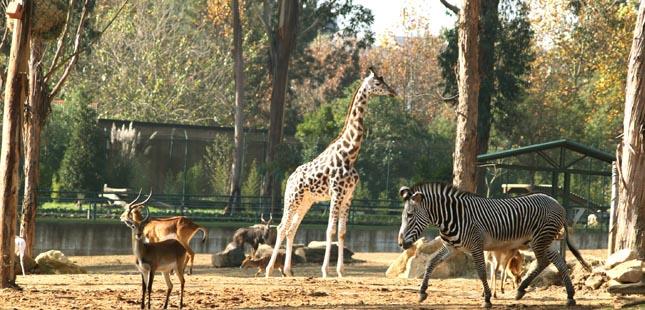 Francesa Ekkio investe mais de dois milhões no maior zoo do Norte