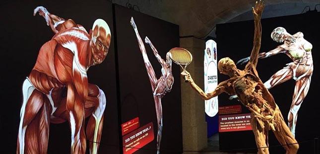 """Exposição """"Corpo Humano - A Ciência da Vida"""" no Porto até outubro"""