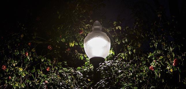 Visita noturna parte à descoberta dos morcegos do Parque de S. Roque