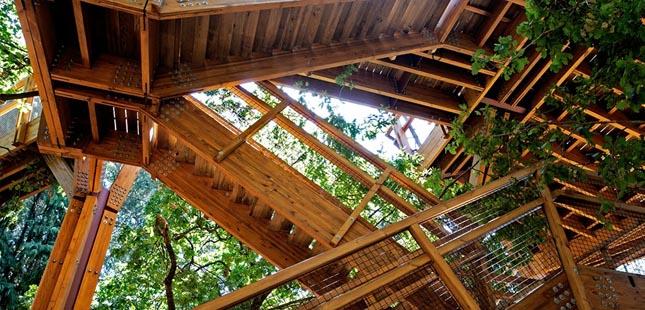 """Treetop Walk"" de Serralves abre ao público este sábado"